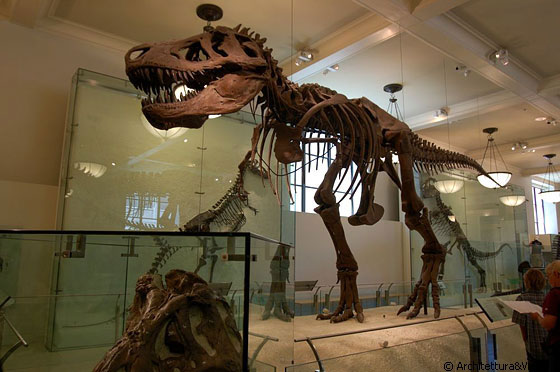 UPPER WEST SIDE - L'American Museum of Natural History in Central Park West (79th St), è noto per le tre grandi sale dedicate ai dinosauri
