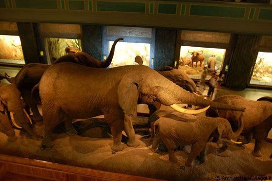 Museo Storia Naturale New York.Upper West Side Elefanti E Riproduzioni Di Habitat Naturali Al