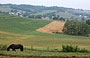 AMISH COUNTRY. La verde vallata che si può ammirare dal Bed and Breakfast <em>Holmes with a view</em>