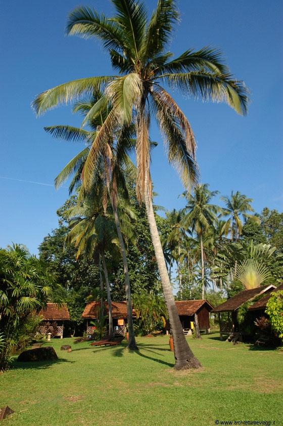 Cherating le alte palme da cocco del giardino di villa - Costo palma da giardino ...